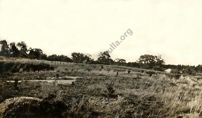 Tarnagulla Pine Plantation, 1927